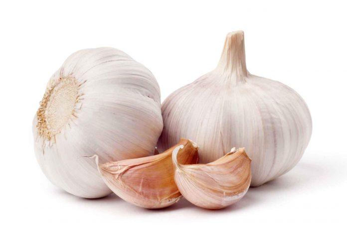 kibow hope Garlic
